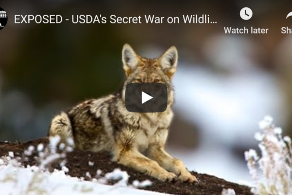 USDA Wildlife Services War on Wildlife