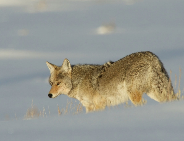 Park Service decision opens way for hunting in Teton park inholdings